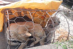 3 thanh niên đi bán chó lúc rạng sáng bị bắt