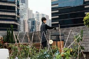 Ghé thăm những vườn rau 'kì diệu' trên nóc nhà chọc trời ở Hồng Kông