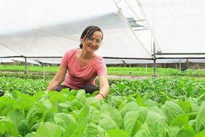 Nữ thạc sĩ với vườn rau hữu cơ '6 không'