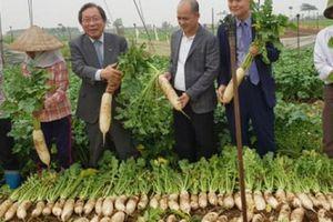 Doanh nghiệp Việt – Hàn bắt tay xây nhà máy chế biến củ cải: Biến thách thức thành cơ hội cho nông dân