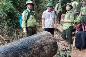 Vụ phá rừng phòng hộ Sông Kôn:'Cán bộ tiếp tay, đau vẫn phải xử lý'