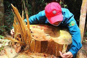 Quảng Nam: Địa bàn quá rộng nên vẫn còn tình trạng phá rừng!?