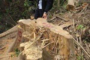 Khởi tố vụ phá rừng phòng hộ Sông Kôn, xác định 5 nghi phạm