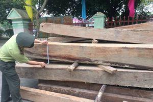 Huế: Tiến hành truy quét, thu giữ nhiều gỗ lậu ngay trong rừng