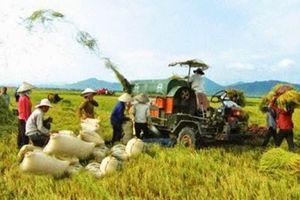 'Vừa đá bóng, vừa thổi còi', Hiệp hội lương thực VN bị kiến nghị cải tổ