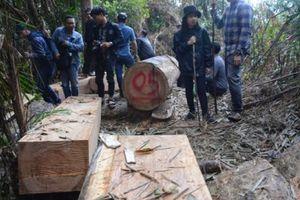 Quảng Nam yêu cầu điều tra vụ phá rừng phòng hộ
