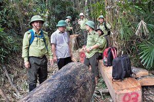 Phó Chủ tịch tỉnh Quảng Nam: 'Thấy rừng bị phá như máu mình đổ xuống'