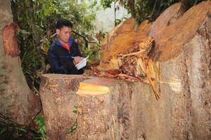 Lãnh đạo tỉnh Quảng Nam công bố hộp thư để nhận phản ánh phá rừng
