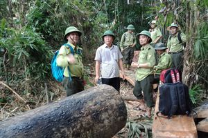 Quảng Nam: Rừng bị tàn phá chẳng khác nào máu mình đã đổ xuống