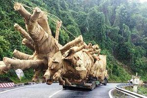 Phát hiện đợt chở cây 'quái thú' thứ 2, cảnh sát ra tay phạt nặng