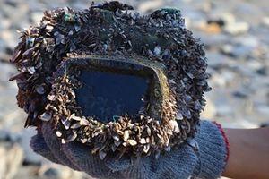Máy ảnh Canon vẫn hoạt động sau 2 năm nằm sâu dưới đáy biển