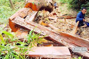 Nhức nhối tình trạng phá rừng phòng hộ