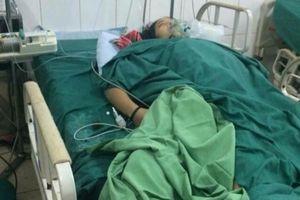 Ngộ độc do ăn phải nấm rừng, 4 người nhập viện cấp cứu