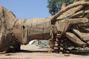 Chủ của 3 cây cổ thụ 'khủng' bị CSGT bắt giữ vẫn chưa lộ diện