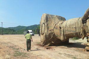 Hé lộ 'danh tính' 3 cây 'quái thú' trên xe bị bắt khi đang vận chuyển