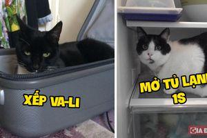 Buồn của sen - Những nỗi khổ chỉ người nuôi mèo mới hiểu