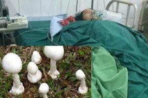 Hà Giang: Ăn phải nấm độc, 2 người tử vong