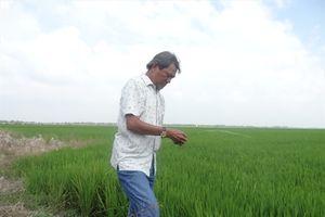 Hiệu quả liên kết sản xuất lúa