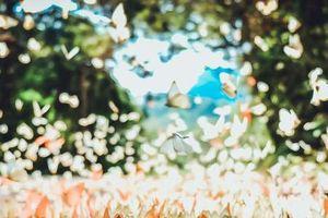 Lưu ngay kinh nghiệm 'săn bướm' ở Vườn Quốc gia Cúc Phương