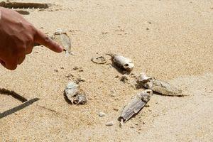 Quảng Trị: Cá chết dạt bờ nghi do đánh bắt bằng thuốc nổ