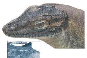 Phát hiện thằn lằn tiền sử có tới 4 mắt
