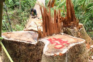 Đình chỉ công tác 6 cán bộ kiểm lâm ở Quảng Nam