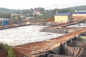 Bình Phước: Đình chỉ cơ sở chế biến mủ cao su gây ô nhiễm môi trường