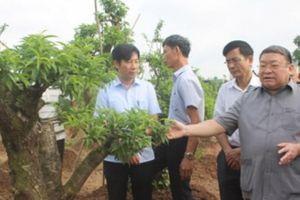 Nông dân làm giàu bền vững thì cần có liên kết trong sản xuất