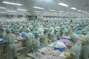 Vụ áp thuế phi lý cá tra Việt Nam, VASEP sẽ khởi kiện Mỹ trong tuần này
