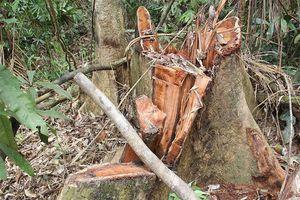 Nhiều cán bộ bị đình chỉ do để mất rừng ở Quảng Nam