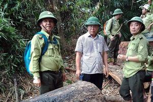 Đồng loạt 3 trạm trưởng kiểm lâm ở Quảng Nam bị đình chỉ công tác