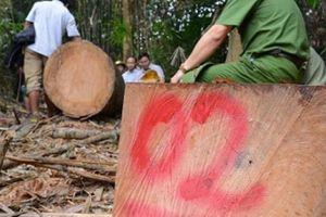 Quảng Nam yêu cầu kiểm lâm cam kết không tiếp tay, bao che lâm tặc