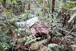 Phát hiện thi thể nam thanh niên đã phân hủy giữa rừng