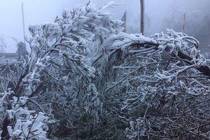 Đỉnh Fansipan phủ kín băng trắng ngay trong ngày đầu đón rét nàng Bân