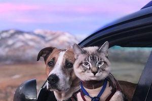 Nửa triệu người follow cặp đôi 'chó-mèo' đi khắp thế giới