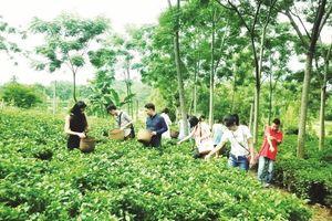 Du lịch nông nghiệp mới ở điểm khởi đầu