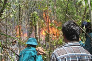 Khống chế đám cháy rừng rộng 30 ha ở Khu bảo tồn thiên nhiên Tà Kóu