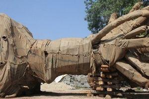 2 trong số 3 cây cổ thụ 'khủng' được trả lại chủ sở hữu