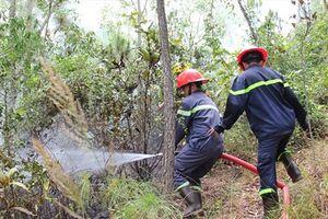 Bình Định: Cháy rừng Bà Hỏa thuộc tiểu khu 331