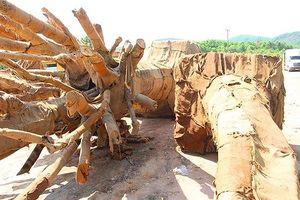 Làm rõ việc xe chở cây 'khủng' lọt qua nhiều trạm kiểm soát tải trọng