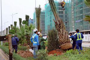 Trồng cây tạo cảnh quan dọc quốc lộ, tỉnh lộ
