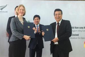 Chôm chôm Việt vừa được cấp 'thị thực' vào New Zealand