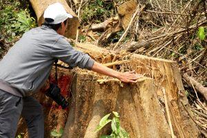Hạt Kiểm lâm rừng đặc dụng Sông Thanh nói về tình hình phá rừng thuộc đơn vị quản lý