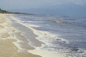 Đà Nẵng ô nhiễm nước biển là do tảo nở hoa