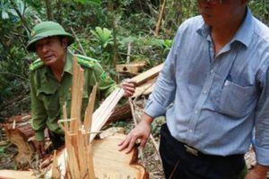PCT UBND tỉnh Quảng Nam gửi tâm thư cho kiểm lâm lúc 0h