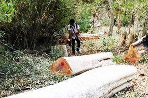Gia Lai: Báo cáo mất 240 ha rừng 'do dân lấn chiếm'