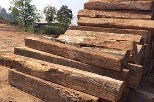 Kon Tum: Có khuất tất khi vận chuyển gỗ tang vật ra khỏi rừng?