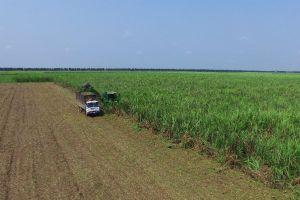 Thành Thành Công - Biên Hòa gọi vốn 450 tỉ đồng từ trái phiếu
