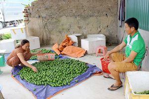 Nghệ An: Chanh tăng giá kỷ lục nhưng người trồng không vui