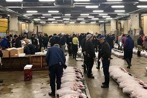 Nhộn nhịp phiên chợ đấu giá cá ngừ lớn nhất thế giới